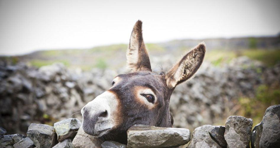 Donkey Farm Martinic at Danilovgrad