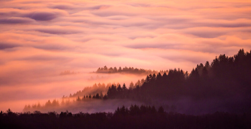 Pink-sunsets-in-the-Black-Forest